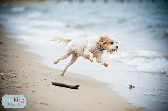 Melbourne Pet Photography of Zuri