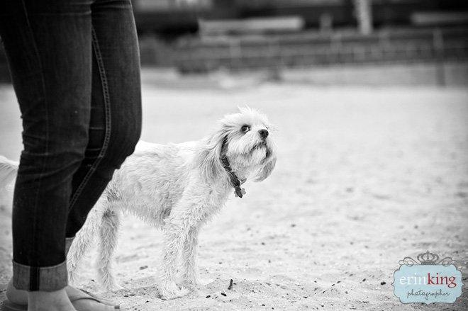 Melbourne Pet Photography of Zuri the Maltalier