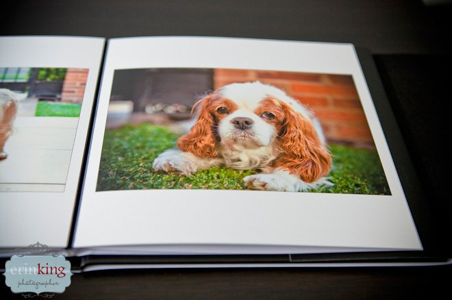 Pet Photography photobook