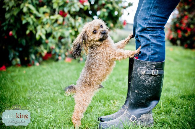 Oscar & Debra in Gumboots Melbourne Pet Photography session