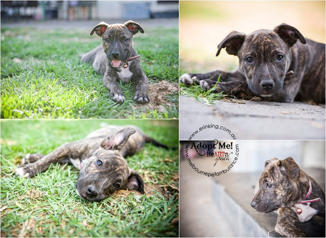 Dogs Needing Homes Melbourne