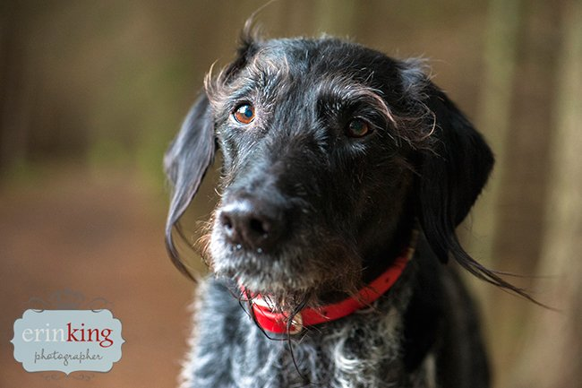 Pet Photography of Merrick with Scruffy