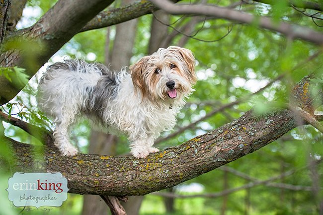 Dog in a Tree