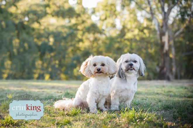 Dogs pet photography