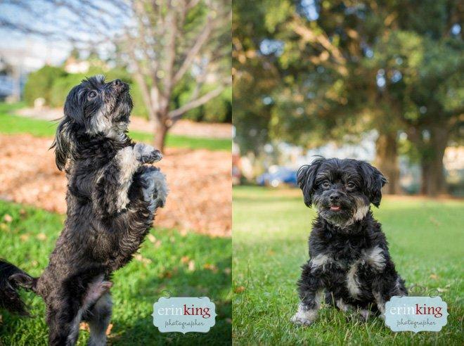 Dog trick posing