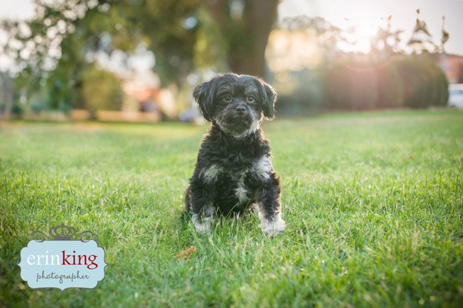 Melbourne rescue dog photography