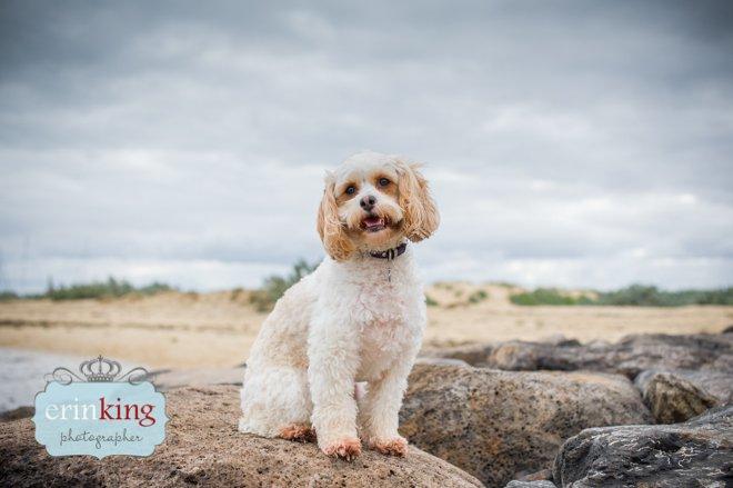 Dog on rocks at beach