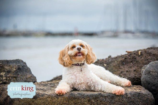 Pet Photography Dog Beach