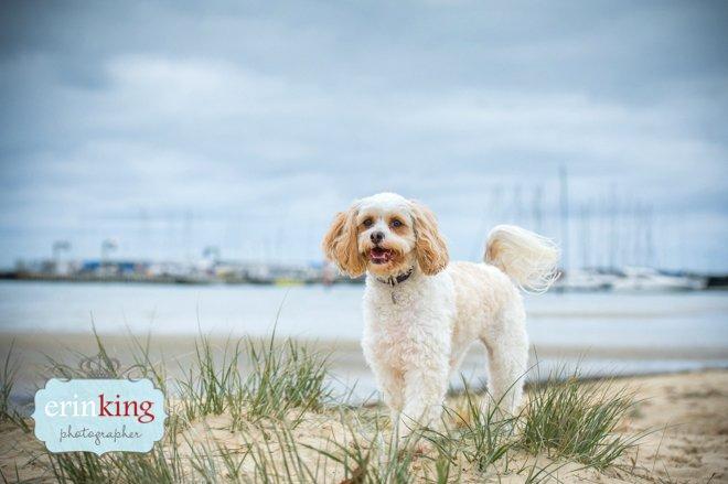 Brighton beach dog