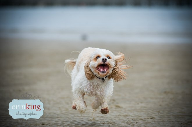 dog running on beach