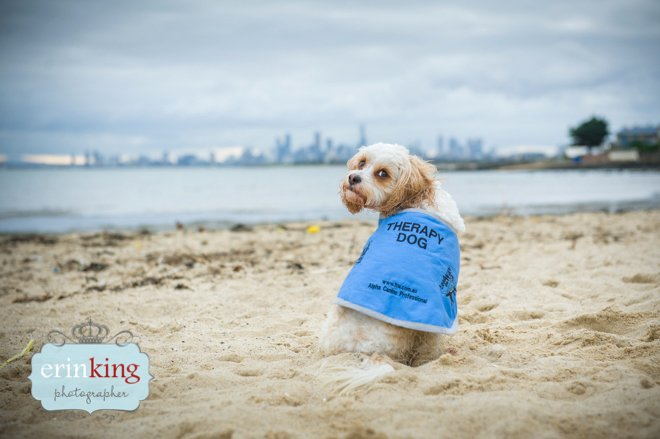 Therapy dog melbourne