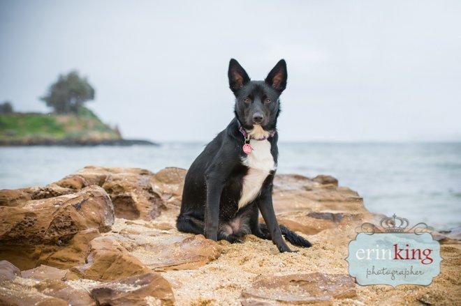 Dog on beach rocks