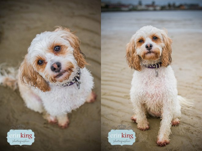Beach pet photography