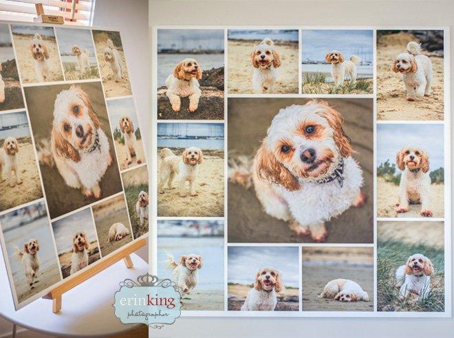 pet photography canvas panel