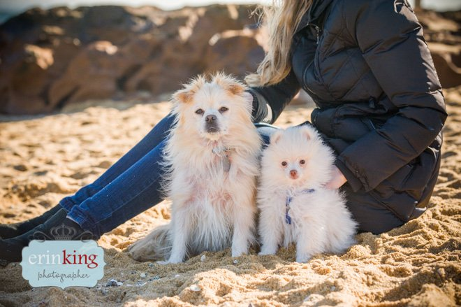 Pomeranian dogs on beach