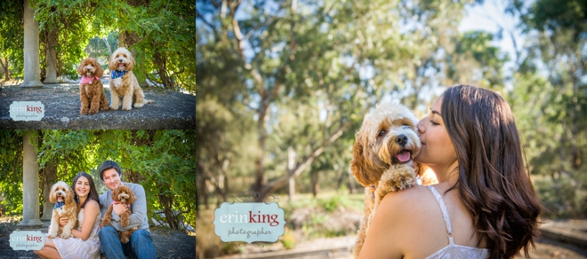 Melbourne Pet Photography