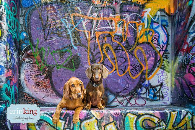 city pet photography graffeti