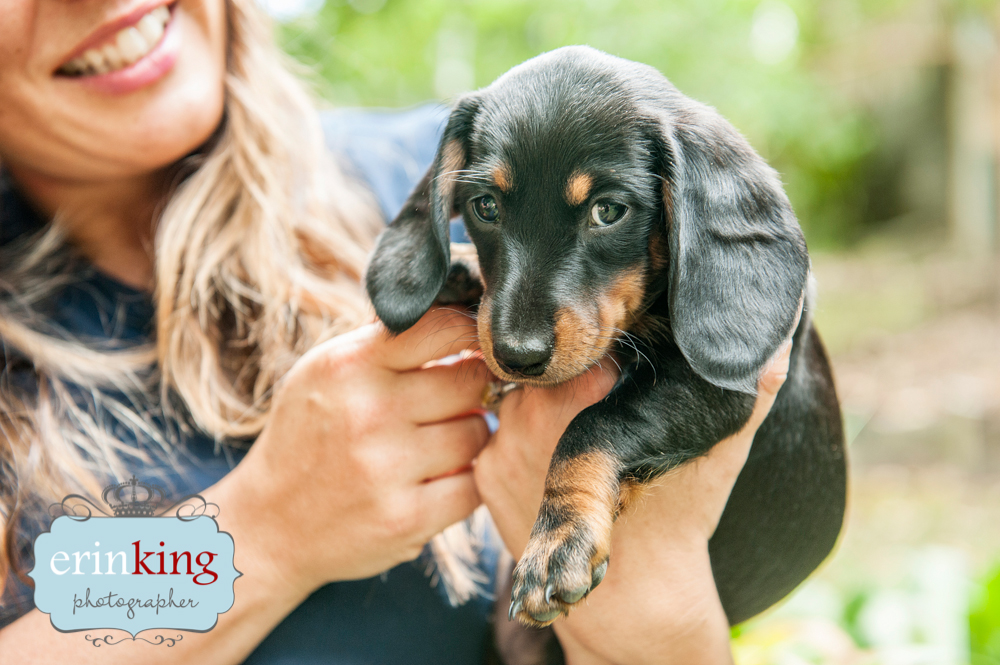 Floella the Dachshund & Puppies – Melbourne Pet Photography