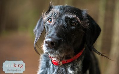 Pet Photography with Scruffy Dog Photography in Canada