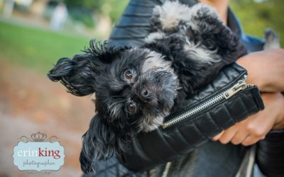 Rodger's Rescue Dog Photography Session