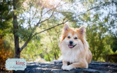 Melbourne Pet Photography – Leesa, Sully & Family
