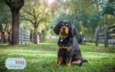 Poochie Palace's Pet Photography Session