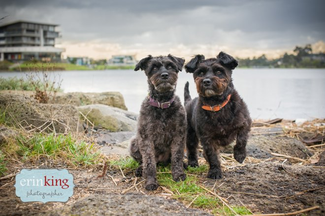 Dogs at Wetlands