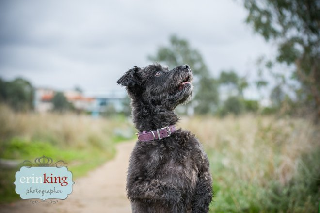 Snoodle Pet Photography