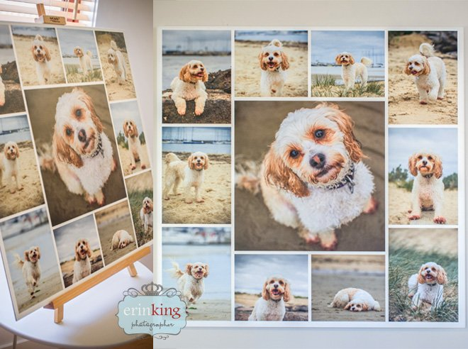 pet photography canvas panel