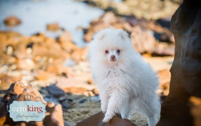 Zoe and her Pomeranians, Sugar and Marlo