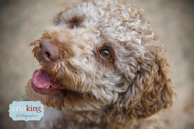 Mocha Melbourne Pet Photography 16