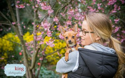 Taco the Foxy Chihuahua Pet Photography