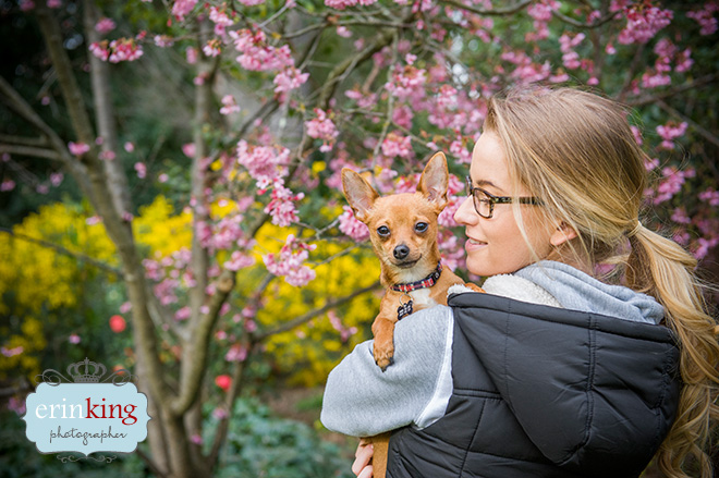 Taco the Foxy Chihuahua Pet Photography