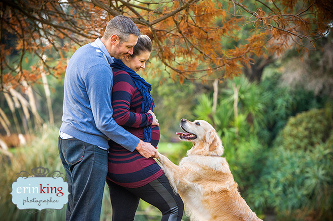 pregnancy pet photography