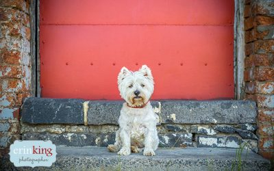 Pet Photography Favourites from 2015