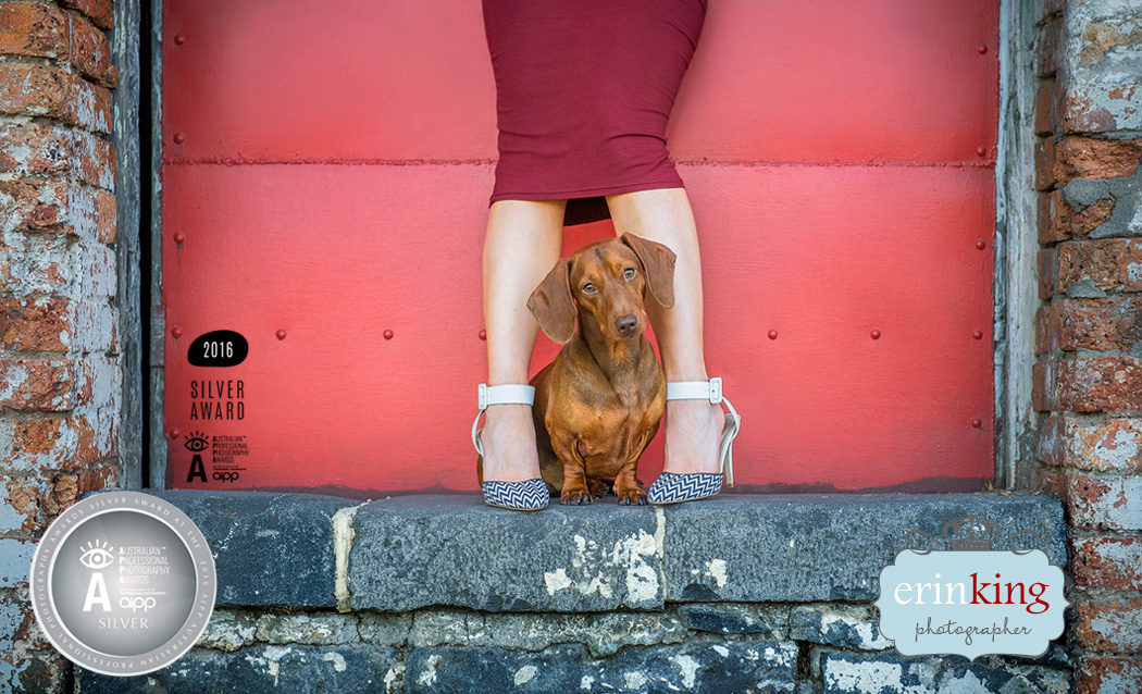 styled pet photography session dachshund