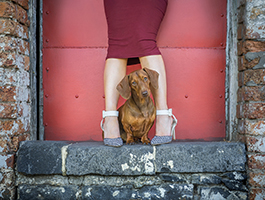 Pet photography sessions styled