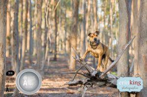 staffy dog award winning photography