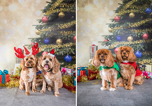 Christmas Dog Portraits