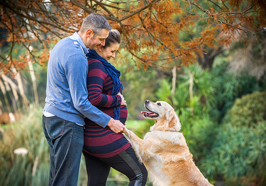 pregnant couple with labrador