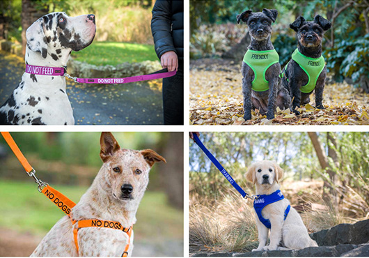 Friendly Dog Collars Pet Photography