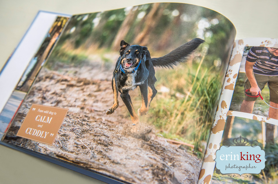Melbourne rescue dogs coffee table photobook