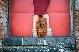 Dachshund pet photography sessions