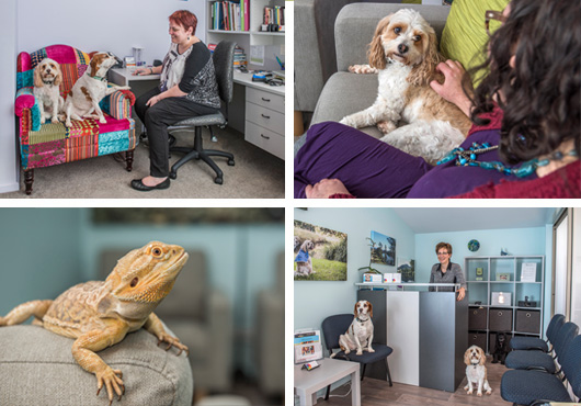 commercial pet photography therapy dogs