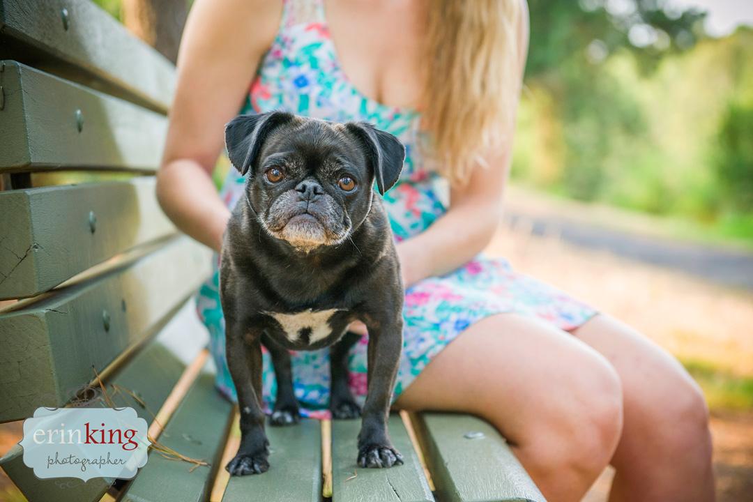 Pug pet photography