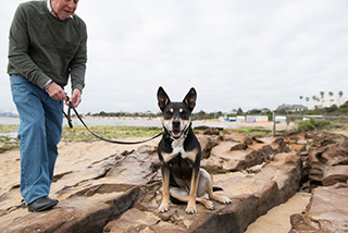 Kelpie at the beach before