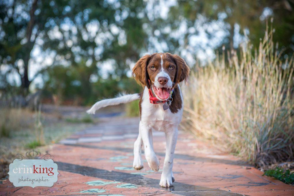 dog running pet photography