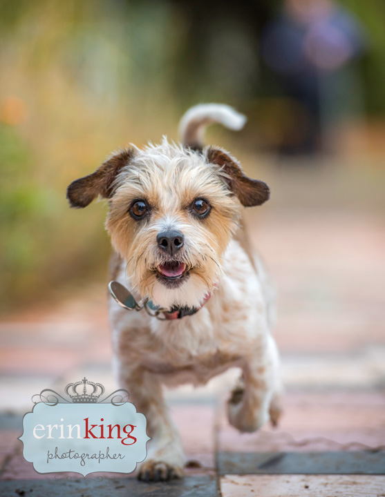 running dog pet photography
