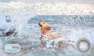 award winning Wave dog