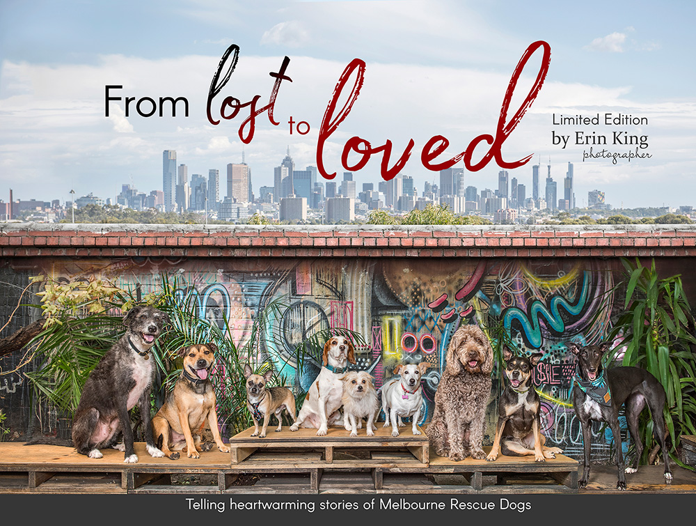 From Lost to Loved Melbourne Rescue Dogs Australian Professional Photography Awards
